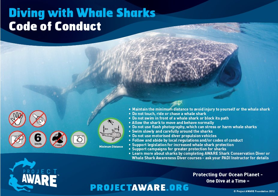 whale shark code of conduct, pls. click to enlarge